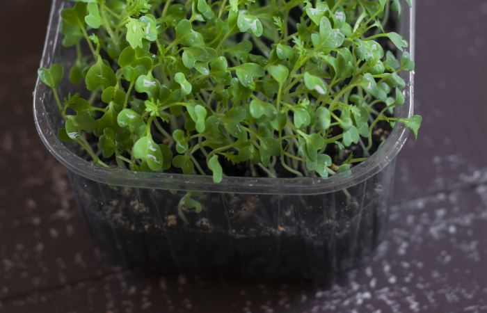 best growing medium for microgreens