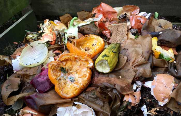 mold in compost