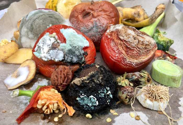 moldy rotting foods
