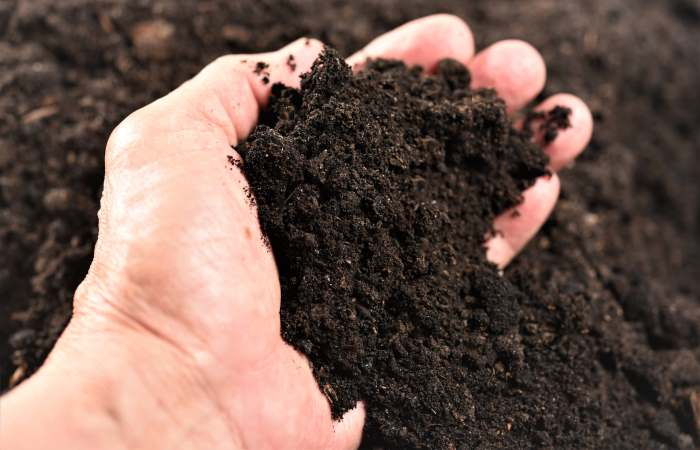 top soil in hand